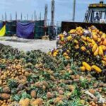 Food Wastage by Nigerians is Highest in Africa-UN Report