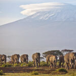 UN: Climate change threatens more people, animals in Africa