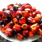 Nigeria set to revive ailing oil palm production